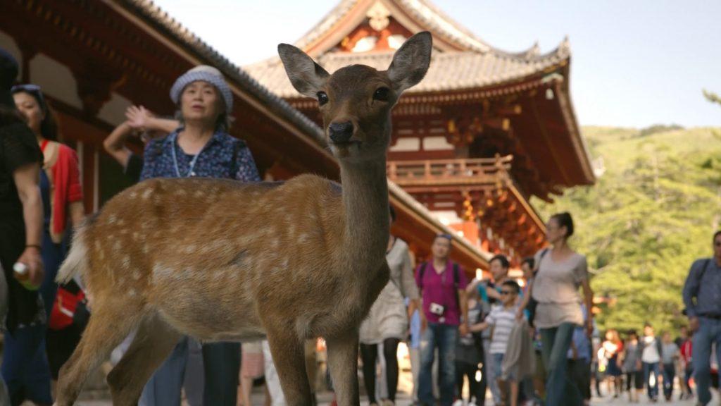 Parco dei Cervi, Nara