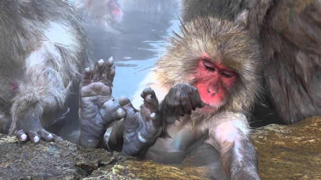Jigokudani Snow Monkeys Park, Yamanouchi
